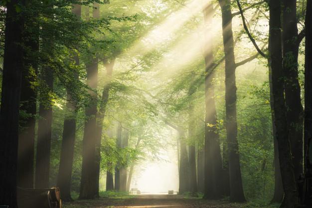 Особливості лісової ренти у 2021 році